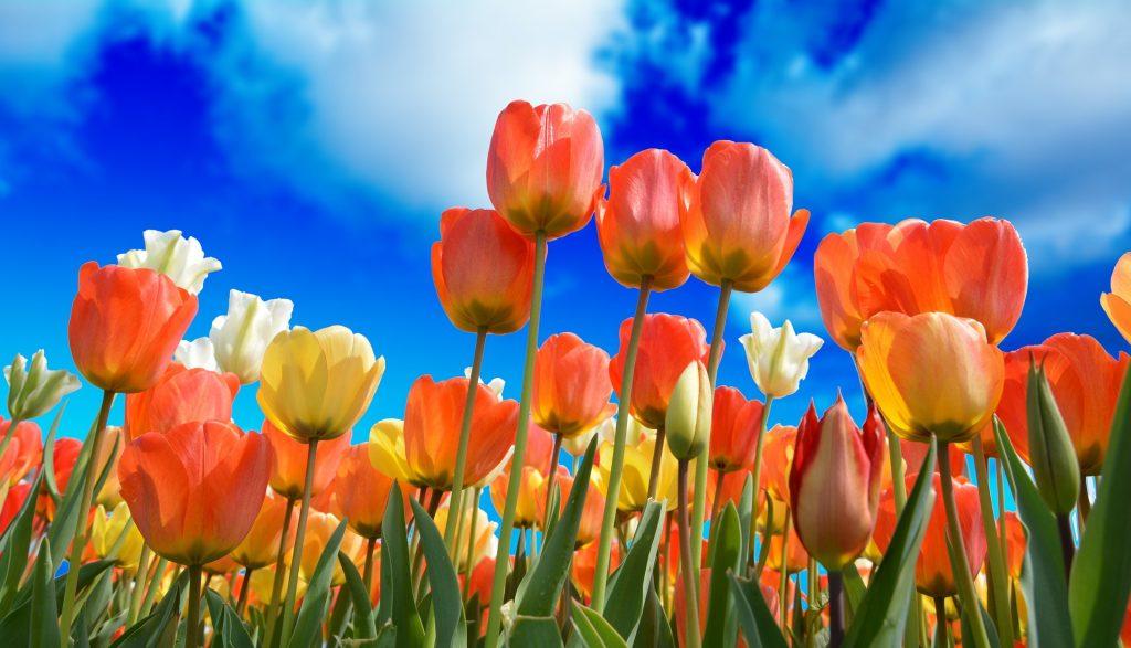 Ein zweiter Frühling ist wie ein Blumenmeer - trotz Altersunterschied