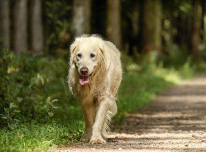 Hund gestorben und die Einsamkeit kommt